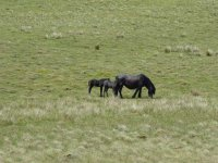 and two of their foals