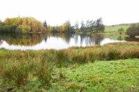 Moss Eccles Tarn on Claife Heights route.